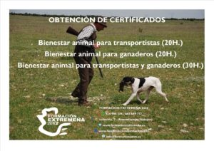 bienestar-animal-copia